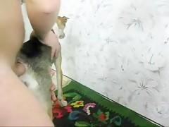 A disposicion de su perro
