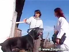 Rubia goloza de las vergas de perro