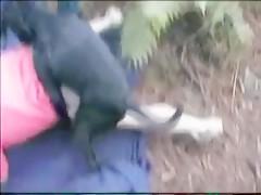Sobre la alpaca de paja