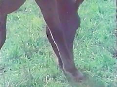 Brasileña con pony
