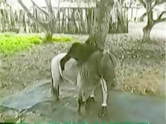 Alicia con caballo