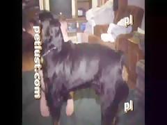Una buena perra de papá