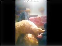 Pequeña brasileña para perro negro
