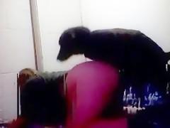 Chocho peludo y perro negro