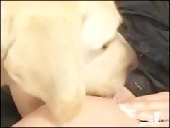 Practica zoofilia con sus 2 cachorros