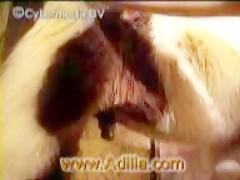 Zoofilia com putinha transando com seu cachorrão