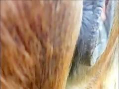 Latina follando a su perro