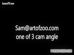 Art of zoo visto desde 1 angulo